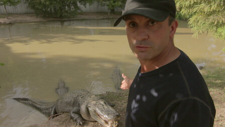 Watch Alligator vs Prehistoric Fish. Episode 5 of Season 1.